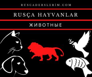 Rusça Hayvanlar